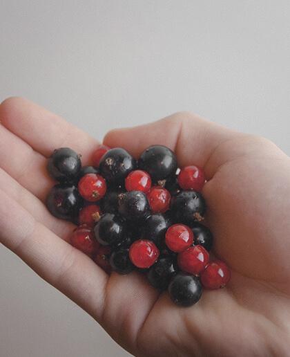 Frutos rojos recogidos por un niño
